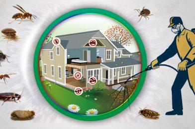 Manfaat Pest Control untuk Rumah Tangga
